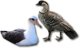 Kauai's Bird Species